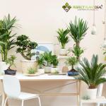 Bond adviseert Victus Participations en Perfect Plant Deal bij de financiering van de uitbreiding van hun online platform voor planten en bomen